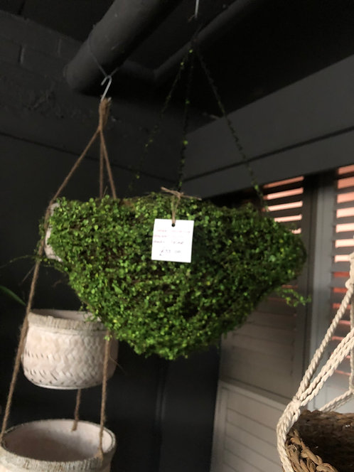 Large Hanging Basket with Baby's Tear