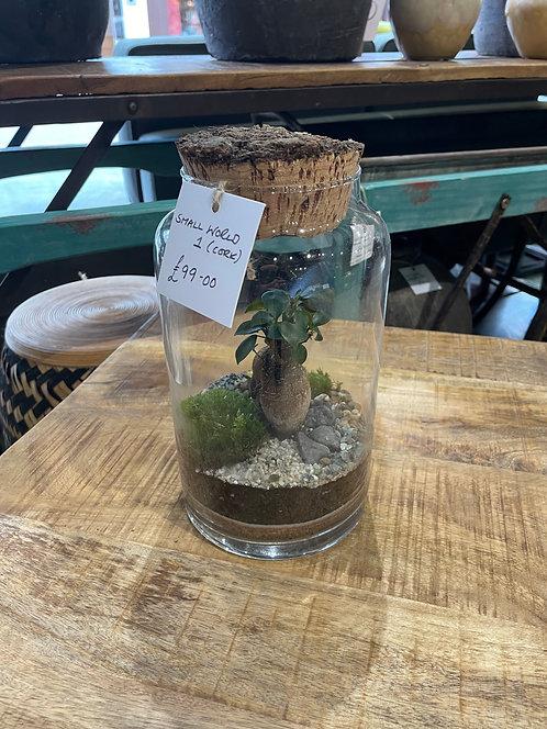 Small World 1 (Cork) Terrarium