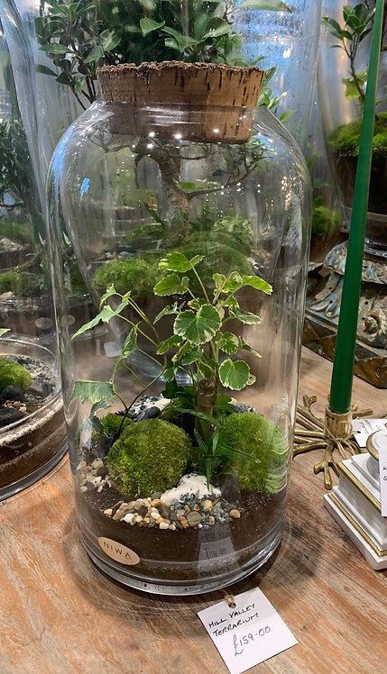 Hill Valley Terrarium