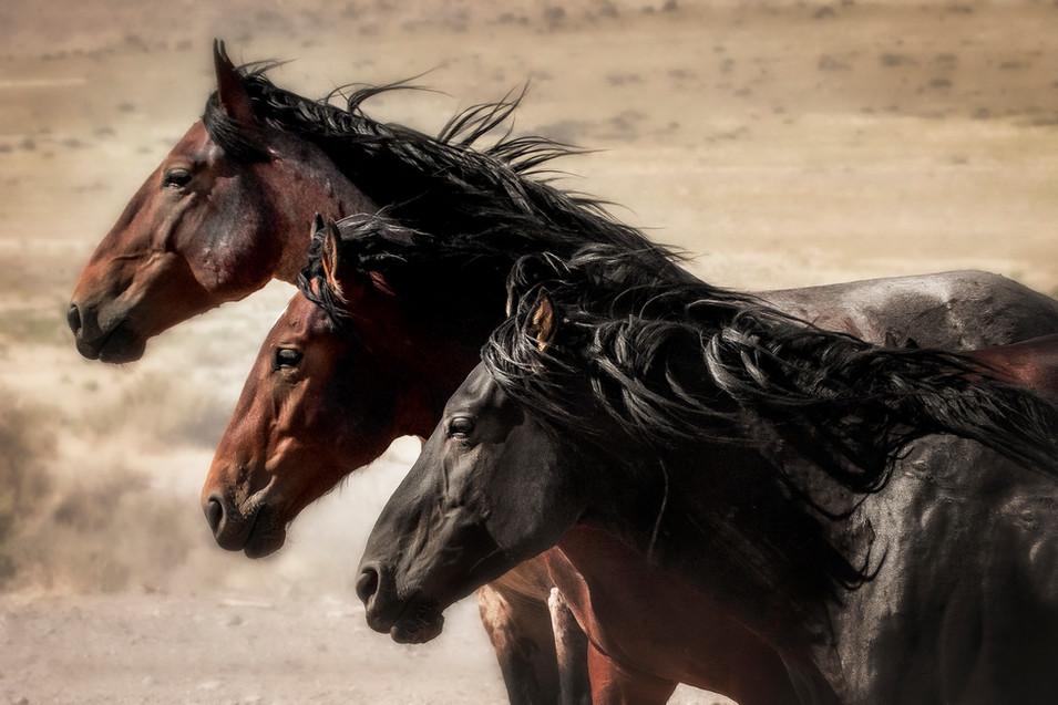 Unity of Stallions