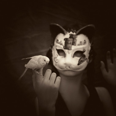 The Cats Delightx72.jpg