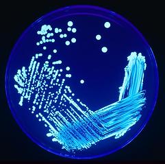 Sanificazione Legionella | Sanarapida