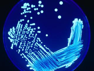 Legionella - contagi sempre più frequenti