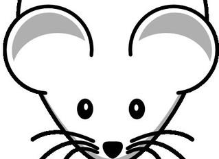 Topi e Ratti come riconoscerli ed eliminarli
