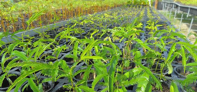 Plante sua muda com a Onda Verde