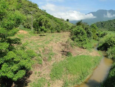 Desmatamento na Mata Atlântica tem alta de 27,2% e mais de 14 mil hectares desflorestados