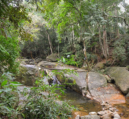 Projeto Floresta Rio Douro