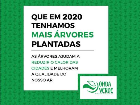 A ONG já plantou mais de 2 milhões de mudas na Mata Atlântica.