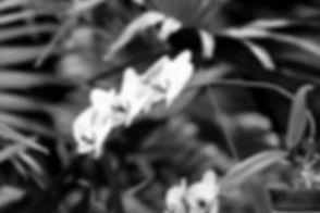 _MG_5684-Edit.jpg