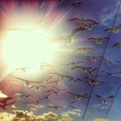 Heavenly! #aruba #catamaran