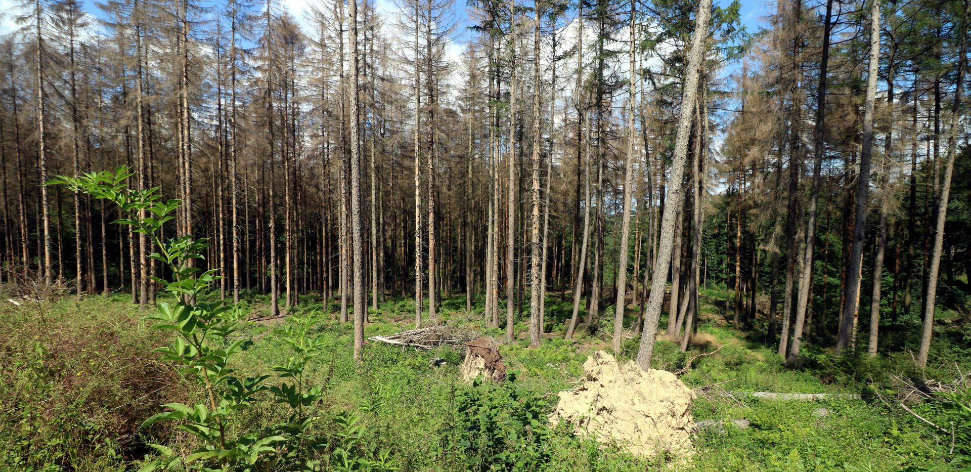 Bürgerwald_2.jpg