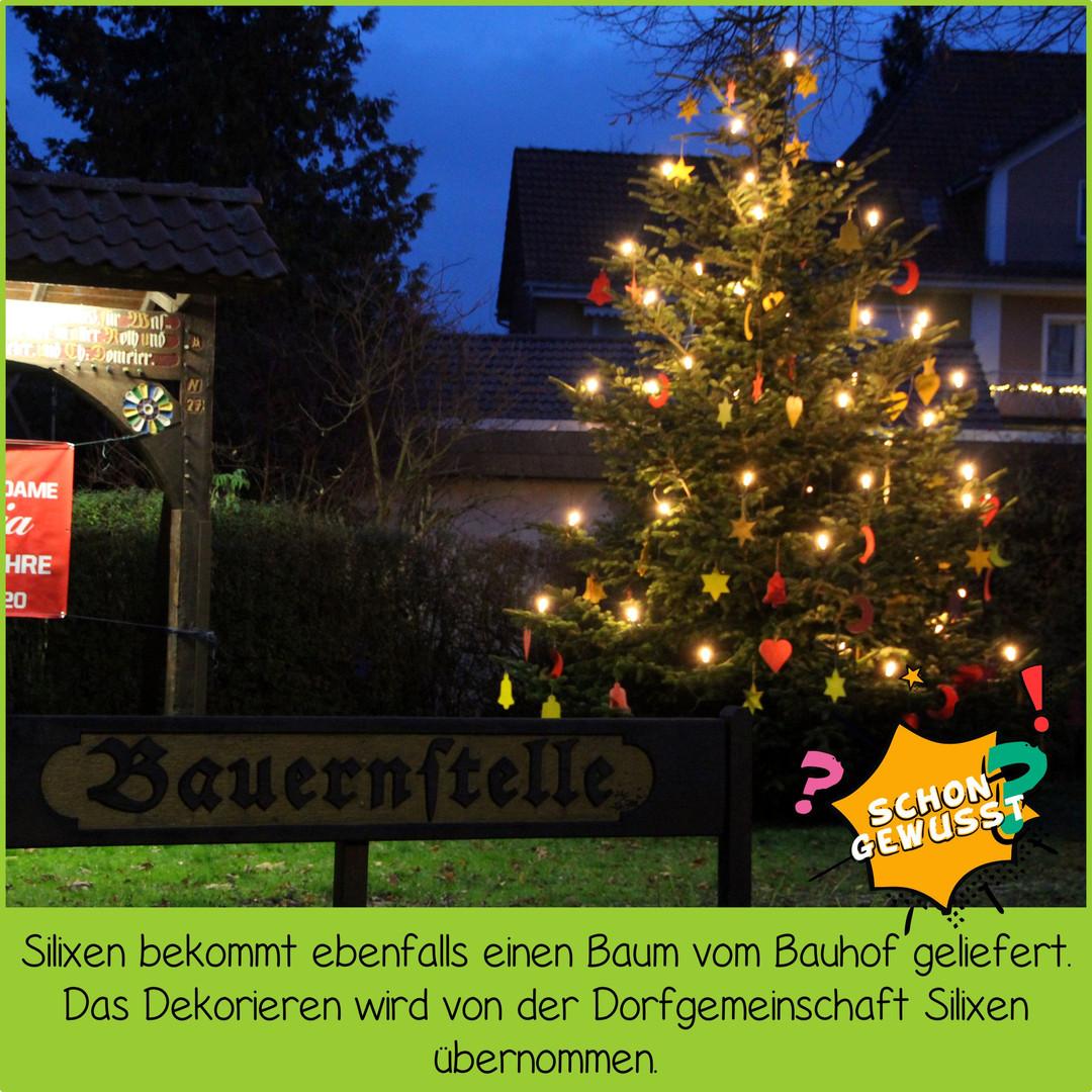 Schon gewusst Weihnachtsbäume 8.jpg