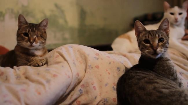Catlady | still