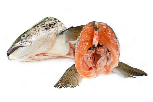 Salmon heads x2