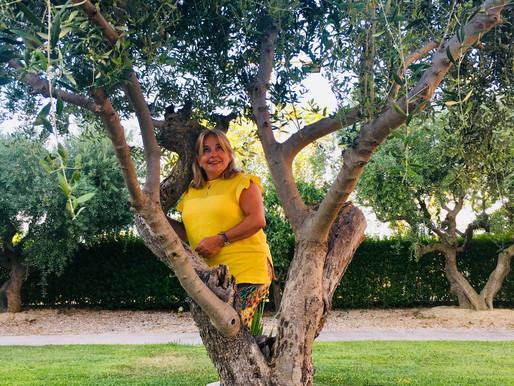 Olivo en La Muela