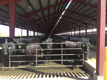 Victory! State Revokes Permit for Mega-Dairy