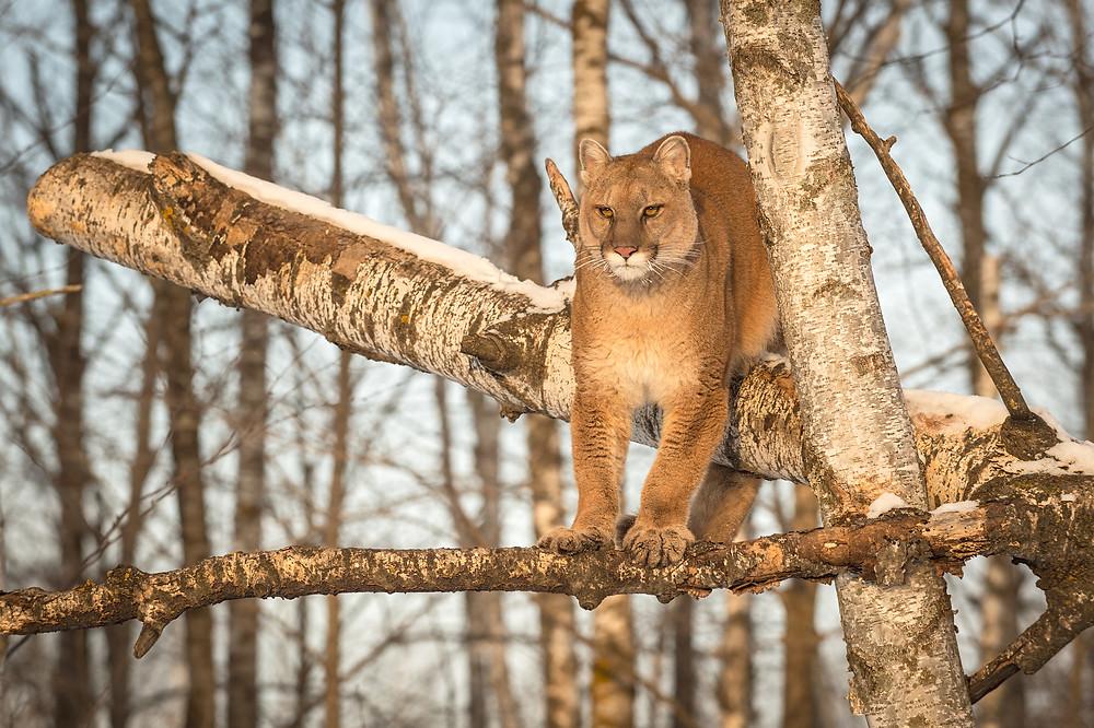 Plans cul femmes cougars