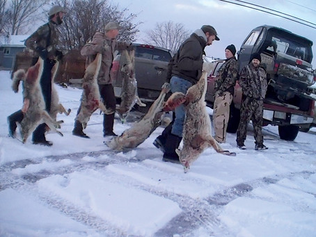 Tell Your State Senator to Stop Coyote Killing Contests in Oregon