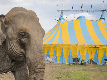Help Ban Traveling Animal Acts in Multnomah County