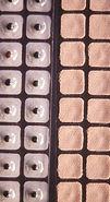 Ear Seed Plasters
