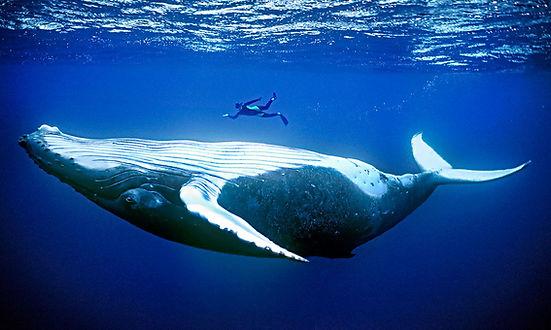 whale_16x9.jpg