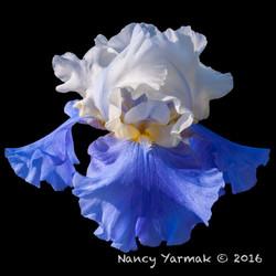 Stairway to Heaven2-Nancy Yarmak