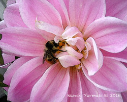Pink Feast-Nancy Yarmak