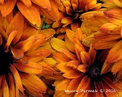 Fiery Passion-Nancy Yarmak