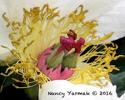 Temptation-Nancy Yarmak