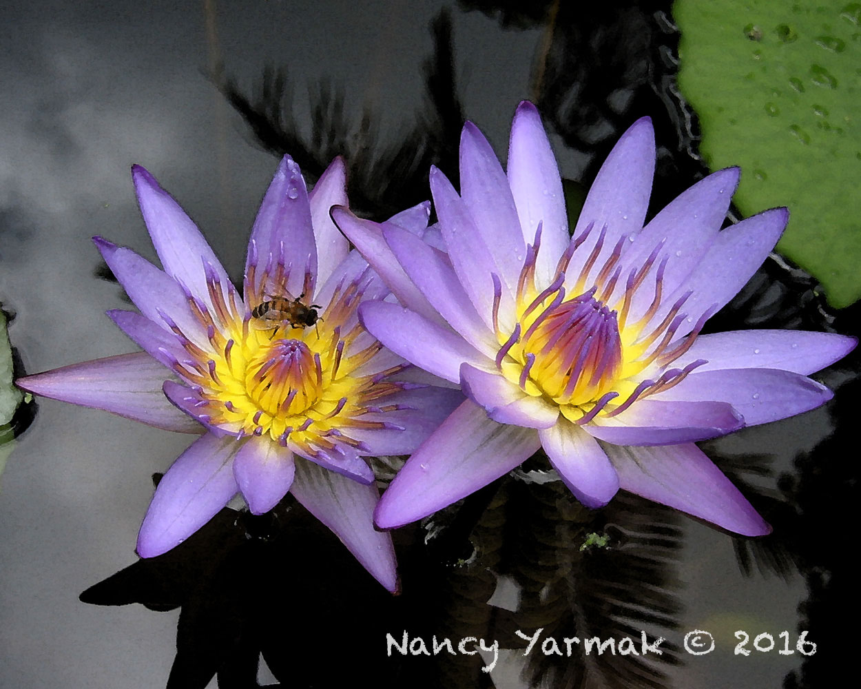 Amethyst Nectar-Nancy Yarmak