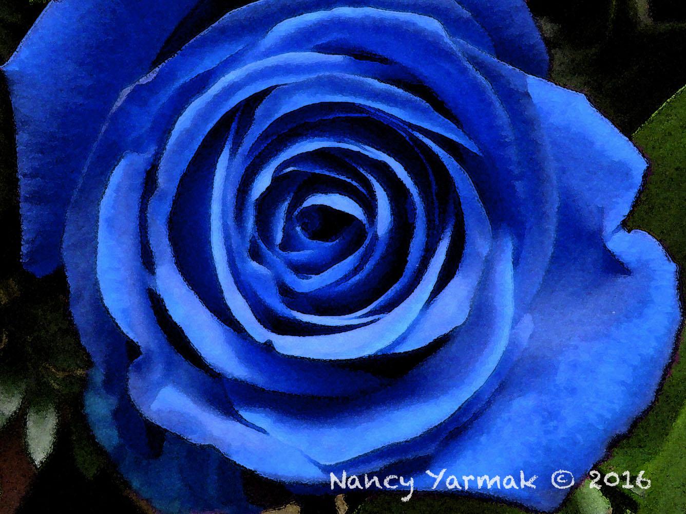 Blue Rose-Nancy Yarmak