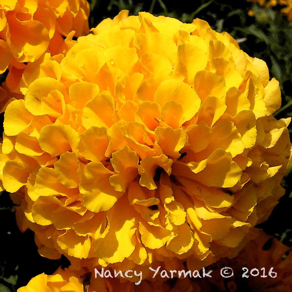 Sunburst-Nancy Yarmak