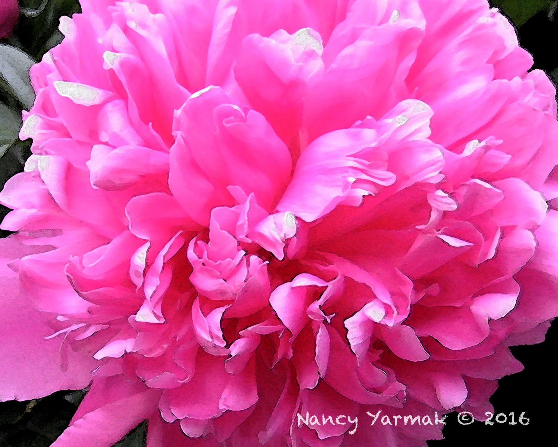 Cotton Candy-Nancy Yarmak