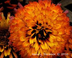 Lava Flow-Nancy Yarmak