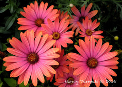 Flower Power-Nancy Yarmak