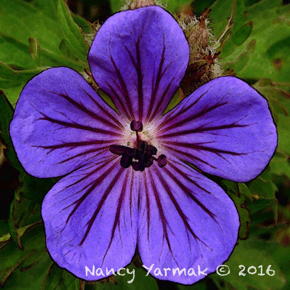 Garden Sprite-Nancy Yarmak