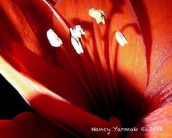Sunrise Shadows-Nancy Yarmak