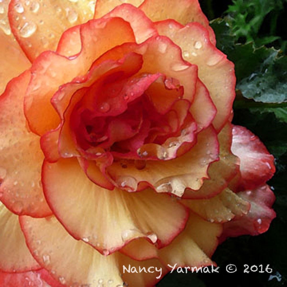 Summer Rain-Nancy Yarmak