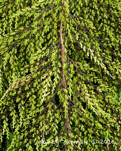 Natures Camouflage-Nancy Yarmak