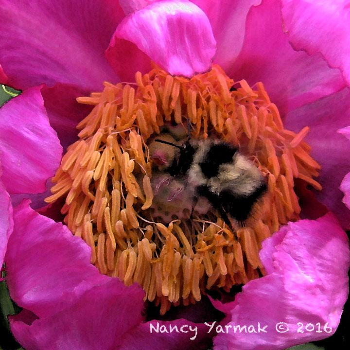 Bee's Nest-Nancy Yarmak