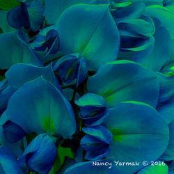 Blue Ginger-Nancy Yarmak