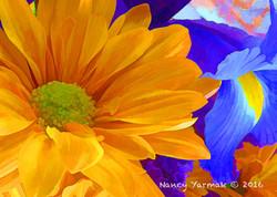 Orange and Iris-Nancy Yarmak
