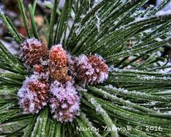 Frosty Beginnings-Nancy Yarmak