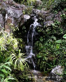 Maui Waterfall-Nancy Yarmak