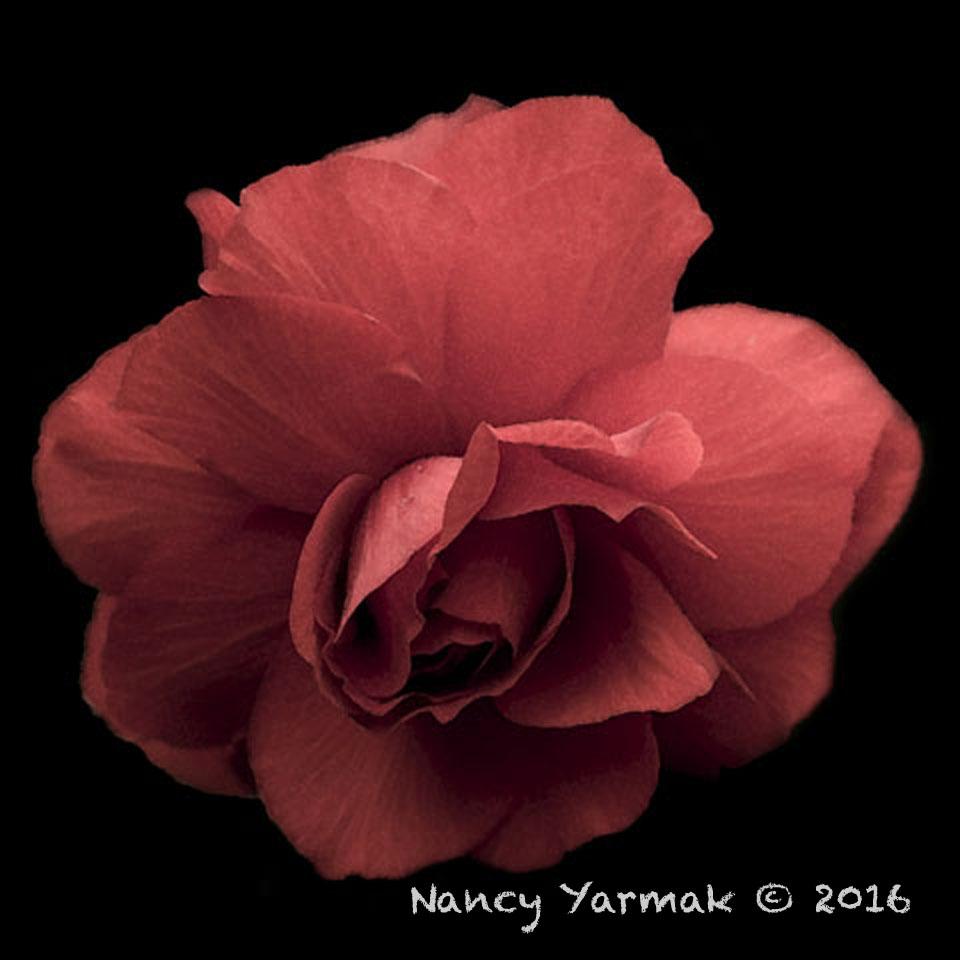 Rememberance-Nancy Yarmak
