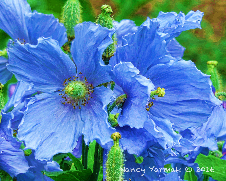Blue Crepe-Nancy Yarmak