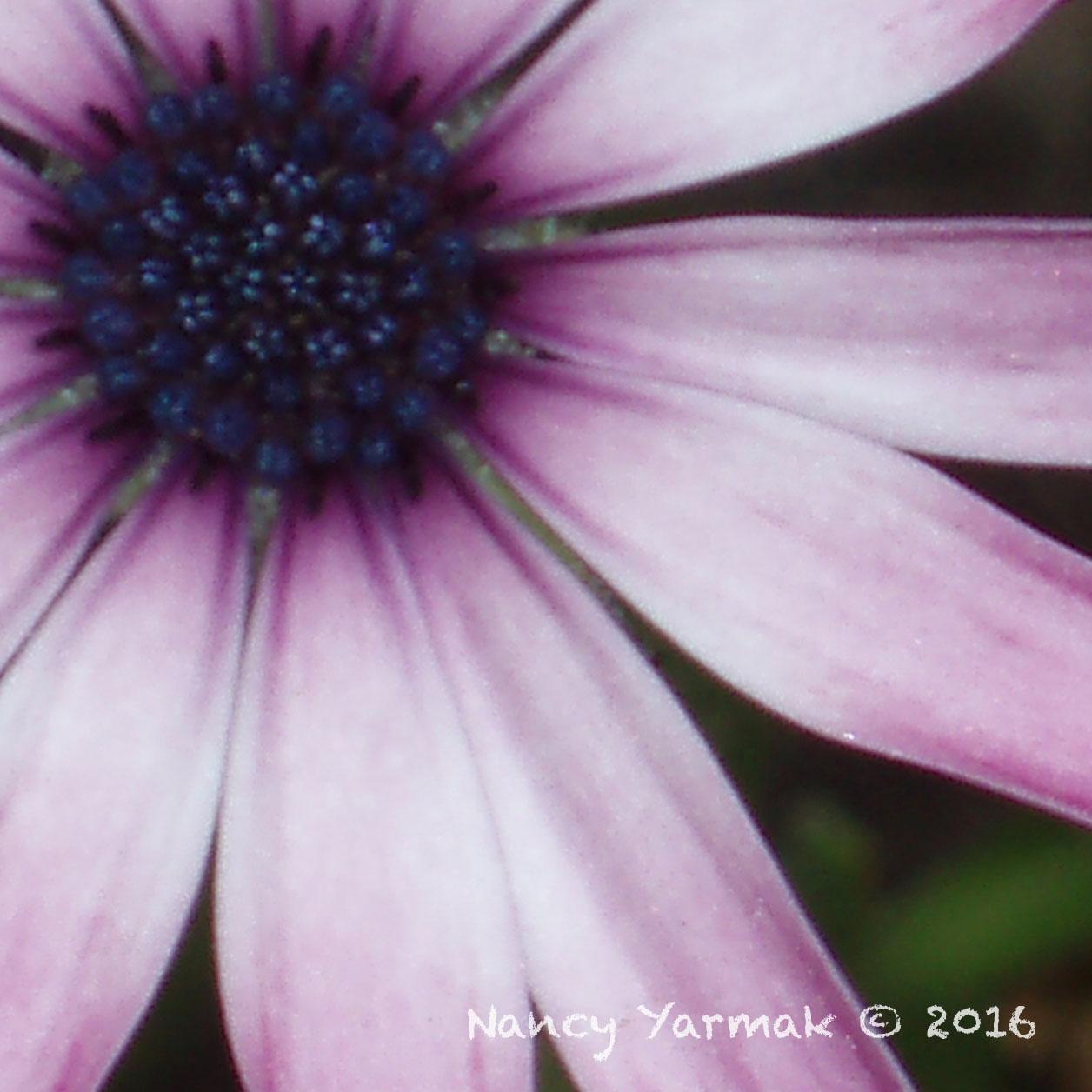 Lavender Sunset-Nancy Yarmak
