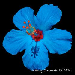 Blue Hawaii-Nancy Yarmak
