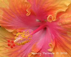 Ruffles Close-Nancy Yarmak