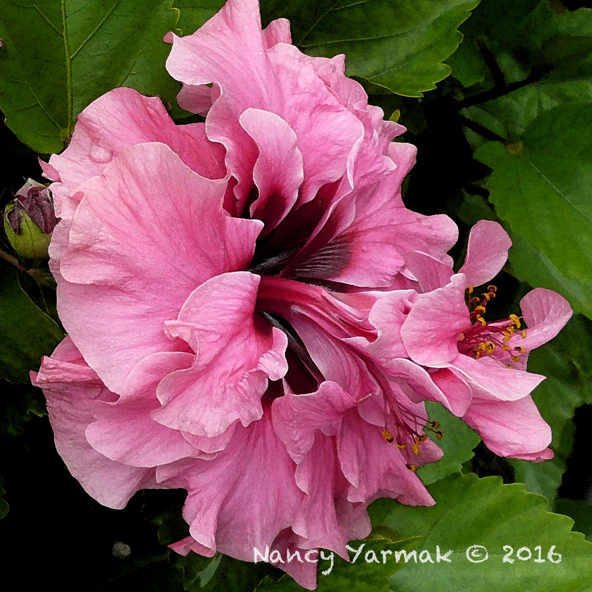 Love At First Sight-Nancy Yarmak
